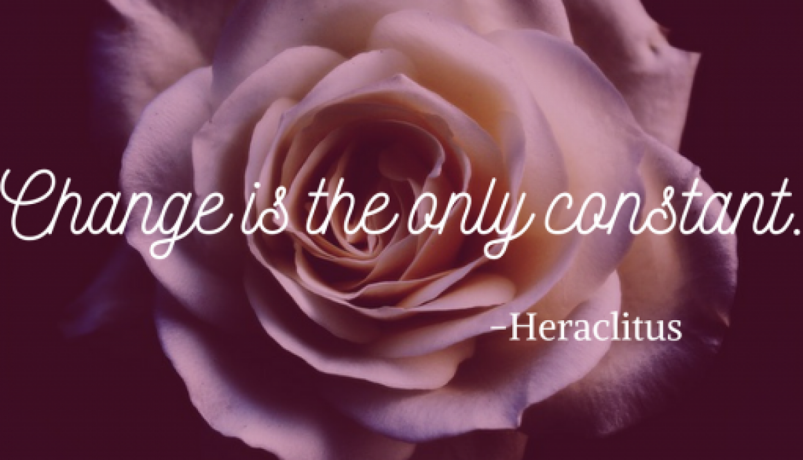 "Rose with quote, ""Change is the only constant"" -Heraclitus"