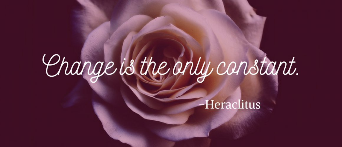 """Rose with quote, """"Change is the only constant"""" -Heraclitus"""